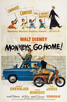 Poster for the Walt Disney film, Monkeys Go Home! The film was directed by Andrew McLaglen and starred Maurice Chevalier, Yvette Mimieux and Dean Jones. Disney Actual, Disney Go, Walt Disney Movies, Classic Disney Movies, Disney Movie Posters, Old Movie Posters, Walt Disney Pictures, Cinema Posters, Disney Princess