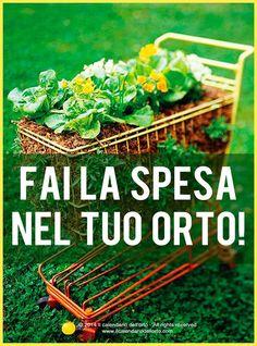 Fai la spesa nel tuo orto!