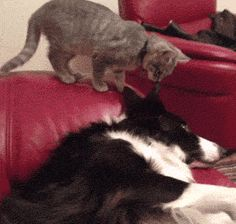 How precious! Click to see GIF.