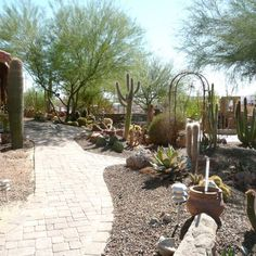 You don't see yards full of cactus (cacti? cactuses?) in the Midwest. Our members in the Southwest have the neatest landscapes! http://www.angieslist.com/photos/landscapes-across-us.htm