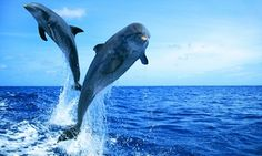 Groupon - Sunset or Coastal Cruise Tickets for 1, 2 or 4 or Private Charter with Wild Dolphin Adventures (Up to 43% Off) in Key West. Groupon deal price: $196