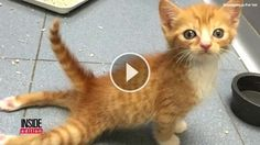 The Amazing Moment When Paralyzed Kitten Realizes He Can Run