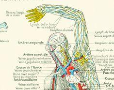 "Original antique print taken from the ""Larousse Médical illustré"" published in 1912, Paris, France. The reverse side is white.  Page size is apprx 18 x 26 cm / 7.5 x 10.1 i... #cardiovascular"