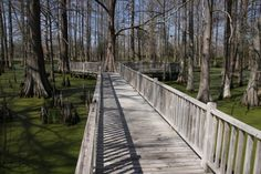 Wooden walkway over a swamp  #infrastructure #wooden #walkway #swamp #photography