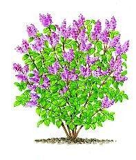 Tailler les branches après la défloraison