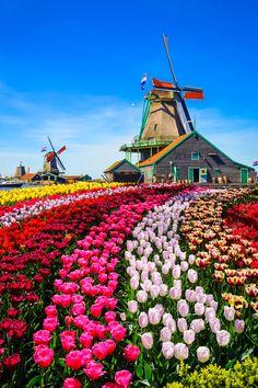 Beautiful Sites, Beautiful Places, Amazing Gardens, Beautiful Gardens, Tulip Fields Netherlands, T Wallpaper, Amsterdam, Beautiful Flowers Wallpapers, Belle Villa