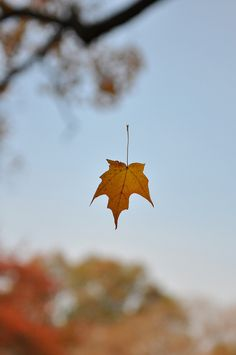 43 Best Falling Leaves images | Leaves, Autumn leaves, Nature