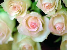 Rosas