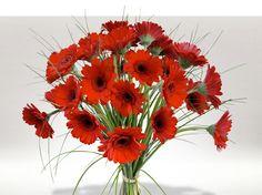 Bouquet de Gerberas (grande soeur des germinis)