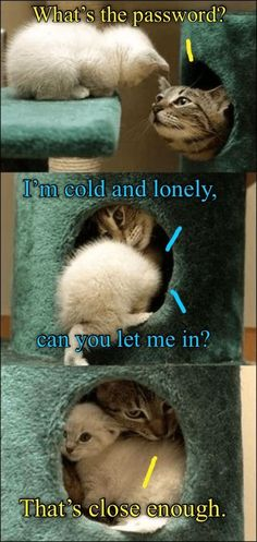 Please let me in your club. - LOLcats is the best place to find and submit funny cat memes and other silly cat materials to share with the world. We find the funny cats that make you LOL so that… Funny Animal Memes, Cute Funny Animals, Funny Animal Pictures, Cute Baby Animals, Animals And Pets, Funny Cats, Funny Humor, Cute Cats And Kittens, I Love Cats