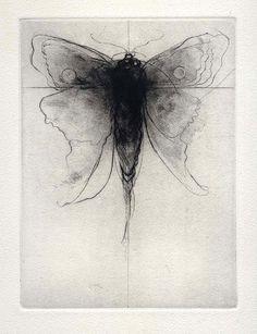 yama-bato: Imaginary Moth: Drypoint by Amy Georgia Buchholz