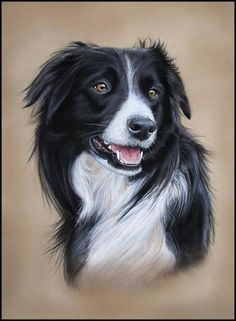 border collie artwork - Google Search