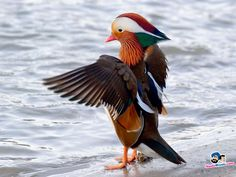This unbelievable bird still standing. this bird is that colorful. And this bird has awesome style.  http://media1.santabanta.com/full1/Nature/Birds/birds-72v.jpg
