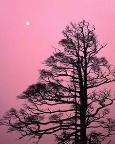 """""""There is absolutely nothing feminine about the colour pink, or, anything bad-luck'ish about the colour black — in itself.""""  ― Mokokoma Mokhonoana"""