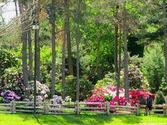 https://www.google.ca/search?q=azalea garden