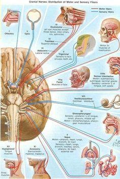 Našli sme pár nových pinov na vašu nástenku Human body - sihelsky.stanislav@gmail.com - Gmail
