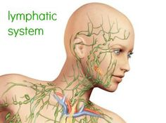 Lymphatic System Head - Here are some things you can do to get relief of your swollen glands and aid the immune system in fighting infection so you can get on the road to health. Ear Drainage, Swollen Lymph Nodes, Lymphatic Drainage Massage, Menopause Relief, Holistic Treatment, Face Massage, Lymphatic System, Immune System
