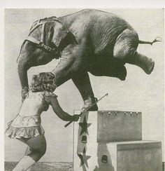 Peggy McDonald and Opal on the Polack Bros Circus. Photo taken in the Circus Pictures, Circus Room, Elephant Walk, Project Board, Big Top, Clowns, Lovely Things, Beauty And The Beast, Elephants