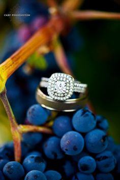 "Stunning #wedding #rings photographed at South Coast Winery, Temecula, CA THE DREAM, ""EMILI"""