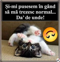 Planuri pentru dimineață - Viral Pe Internet Good Morning Roses, Happy Morning, Funny Memes, Jokes, Emoticon, Super Funny, Animals And Pets, Comedy, Geek Stuff