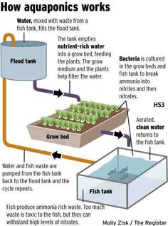 Early spring inspiration: aquaponic garden #GreenLiving #Aquaponics #OrganicGardening #GardeningTips