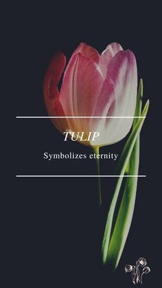 Flower Symbol, Tulips, Symbols, Flowers, Royal Icing Flowers, Tulip, Flower, Florals, Glyphs