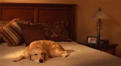 cool-gif-dog-sleeping-wakes-up