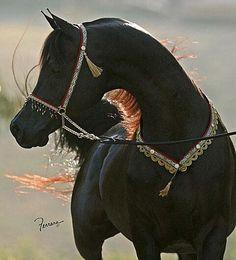 Arabian beauty. The foundation of all.