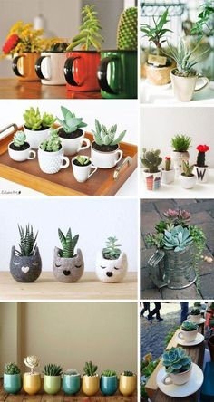 Cactos e Suculentas na Caneca Fun containers to give succulents a life of their own. The post Cactos e Suculentas na Caneca appeared first on Best Of Likes Share.Teacup Mini Gardens Ideas to cOne day I hope to have a colleIdeas que mejoran tu vidaThe Succulents In Containers, Cacti And Succulents, Planting Succulents, Planting Flowers, House Plants Decor, Plant Decor, Succulent Gardening, Container Gardening, Indoor Garden