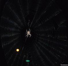 Front porch spider