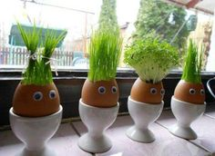 Wash out egg shell, let dry, place a water soaked cotton ball in the bottom of the egg, add grass/wheat seat, place in a warm sunny spot! Watch grow and trim the hair!