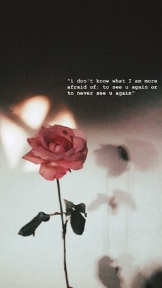 This is so fucking on point but now my fear to see u again has become more powerful then never seeing u again . U r safe far away from me tc . Words Wallpaper, Rose Wallpaper, Wallpaper Quotes, Rose Quotes, Flower Quotes, Snap Quotes, Words Quotes, Qoutes, Heartbreak Wallpaper