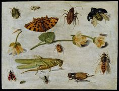 Jan van Kessel, Insects, C. Historia Natural, Birds And The Bees, Insect Art, Amazing Paintings, Nature Journal, Dutch Artists, Museum Collection, Old Master, Botanical Illustration