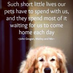 """Such short little lives our pets have to spend with us, and they spend most of it waiting for us to come home each day"" -John Grogan, Marley and Me"