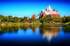 Animal Kingdom - Disney World - Orlando, FL