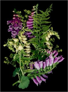 Purple Flowers. botanical scanner photography - Scanner Photography By Ellen Hoverkamp