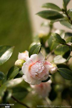 Pour donner du relief au jardin et emp cher le vis vis for Entretien jardin noumea