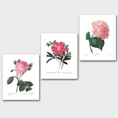 Set of Botanical Prints SALE (Pink Flower Wall Art, Pink Flower Art, Pink Room Decor, Pink Nursery) Redoute Print Set of 3