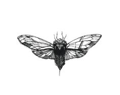 Cicada | Illustration by miroosa | obsessed with this little ones | ink pen & pencil on bristol | exploration of black line and white space | tattoo idea design