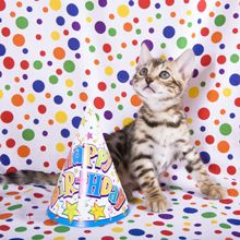 How to Throw a Birthday Party for Your Cat - Catster Cat Birthday, First Birthday Parties, First Birthdays, Happy Birthday, Dog Parties, Birthday Stuff, Crazy Cat Lady, Crazy Cats, Bee Movie