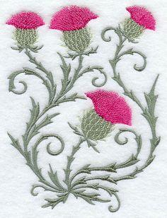 Blooming Thistles