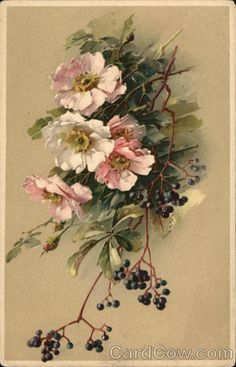 Some beautiful Catherine Klein florals here in addition to this one, Wild Roses and Elderberries Art Vintage, Vintage Cards, Vintage Postcards, Vintage Prints, Illustration Botanique, Illustration Blume, Botanical Illustration, Catherine Klein, Vintage Flowers