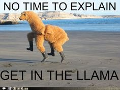 I've no idea why I did this so funny. Llamas are hilarious. People in a llama suit prancing around on a beach makes for an absolutely priceless photo. I need a llama suit. Funny Shit, Haha Funny, Funny Stuff, Funny Ads, Freaking Hilarious, Funny Humor, Llamas, I Love To Laugh, Make Me Smile