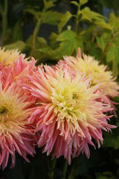 flowers 切花