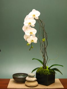 Orchids are beautiful, elegant and long lasting flowers.