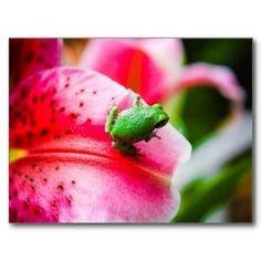 tree frog by Stormdreamer