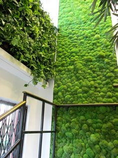 living wall and moss wall on staircase