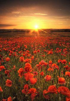 Breathtaking Flower Fields Photography | Abduzeedo | Graphic Design Inspiration and Photoshop Tutorials