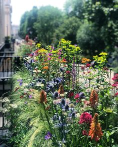 "50a9944efd4e4c Alexander Hoyle on Instagram  ""Terrace planting by me 💚  iloveit   newproject  plantingdesign  flowers  euphorbia  kniphofia  eringium   achillea  grasses ..."
