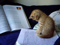 reading kitty